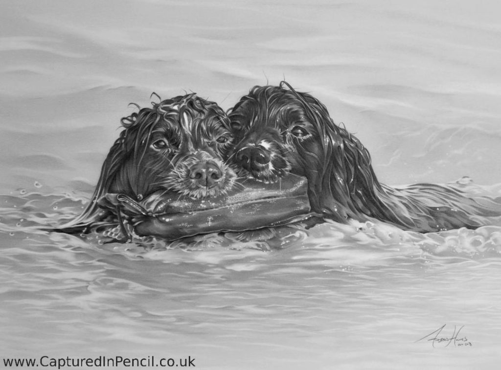 Two dogs in water